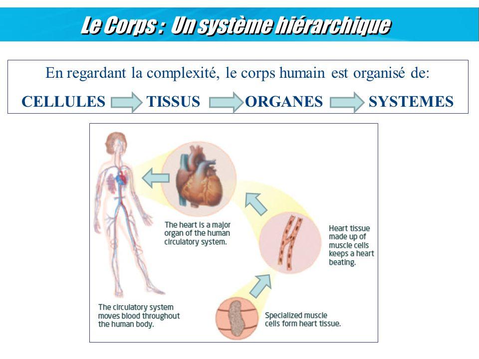 Le Corps : Un système hiérarchique En regardant la complexité, le corps humain est organisé de: CELLULES TISSUS ORGANES SYSTEMES