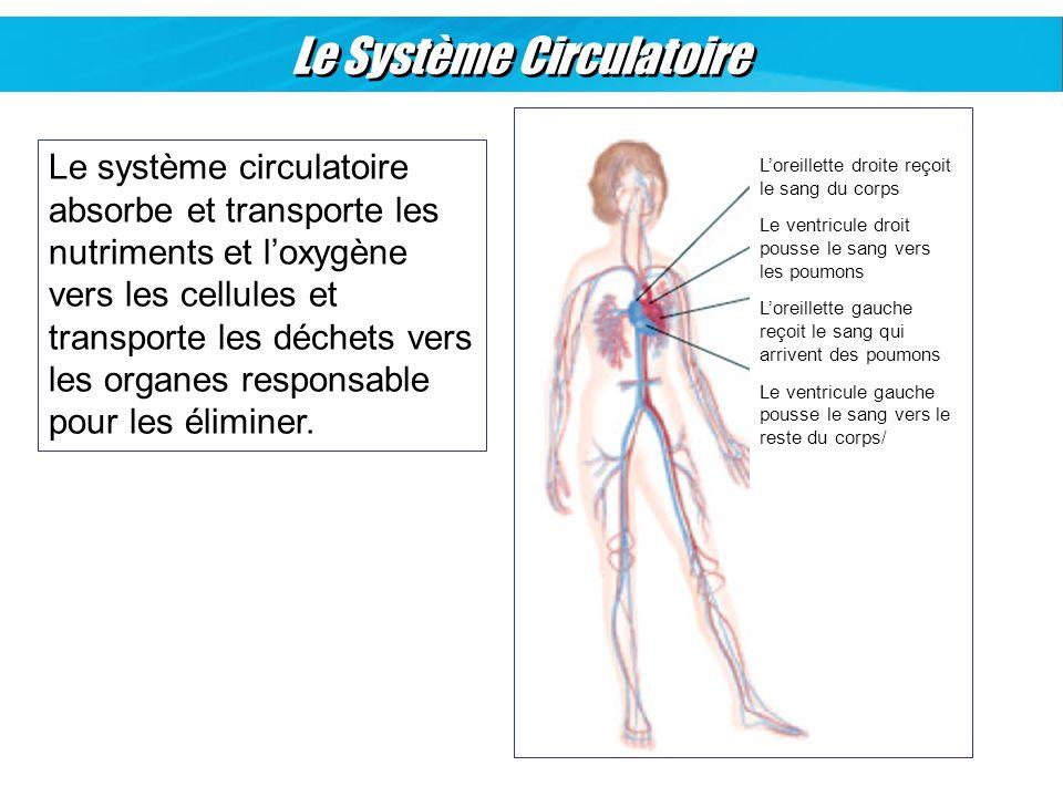 Le Système Circulatoire Le système circulatoire absorbe et transporte les nutriments et loxygène vers les cellules et transporte les déchets vers les