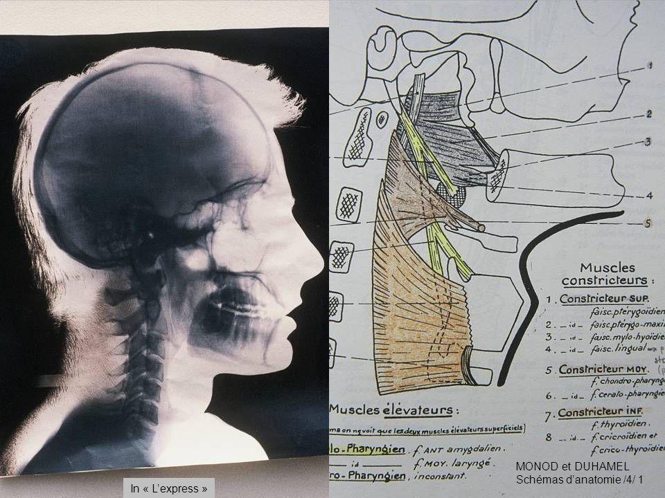 MONOD et DUHAMEL Schémas danatomie /4/ 1 In « Lexpress »