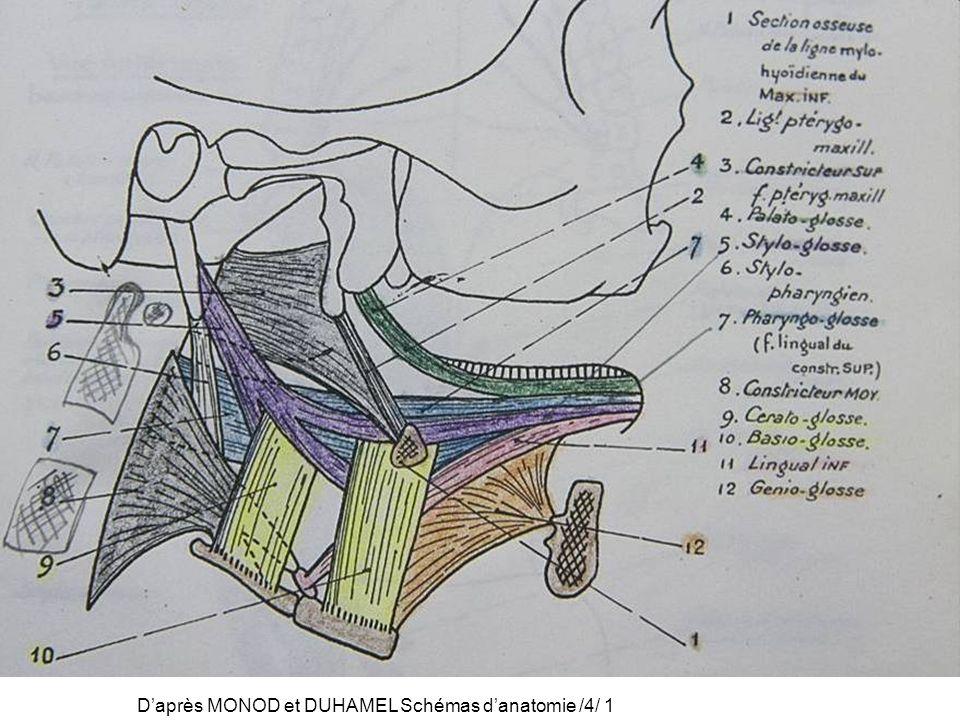 Daprès MONOD et DUHAMEL Schémas danatomie /4/ 1