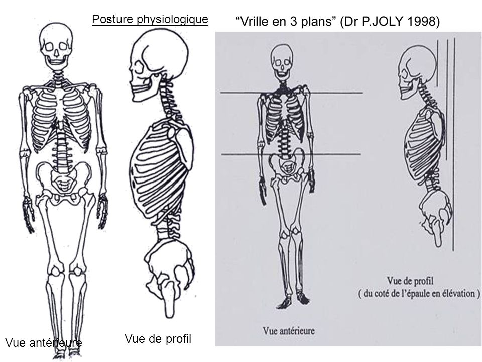 Posture physiologique Vue antérieure Vue de profil