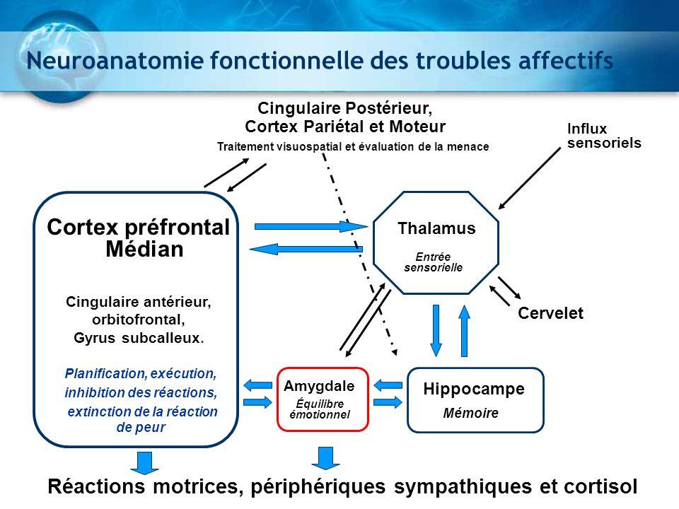 Anomalies fonctionnelles de la dépression Amygdale Cortex Préfrontal ventrolateral Cortex Préfrontal subgénual Cingulairedorsal Indique la direction du changement de métabolisme chez les sujets en dépression vs.