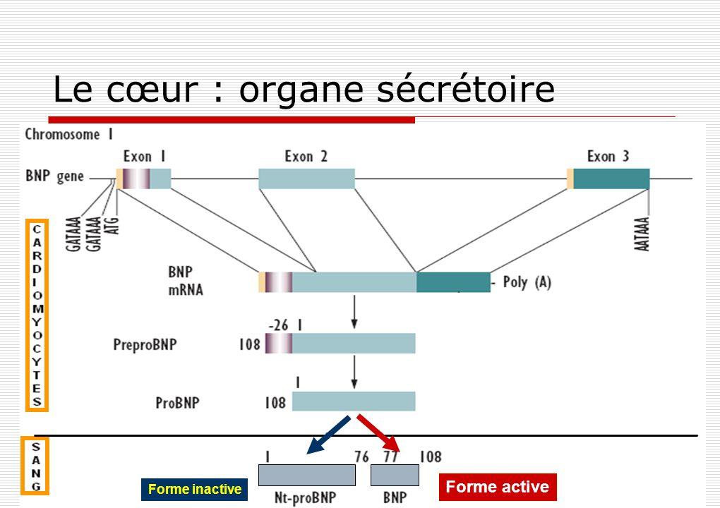 BNP NtProBNP Action physiologique : BNP = hormone active NPR : Natriuretic peptid receptor Diminution de la PA - EPN NPR-C Clearance : T 1/2 =20min T 1/2 =120min Clearance : Surcharge cardiaque Etirement (stretch) cardiomyocyte + Natriurèse Diurèse Blocage SRAA NPR-A/B NPR-A VD périphérique