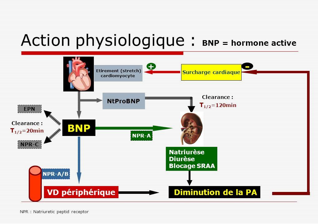 BNP NtProBNP Action physiologique : BNP = hormone active NPR : Natriuretic peptid receptor Diminution de la PA - EPN NPR-C Clearance : T 1/2 =20min T