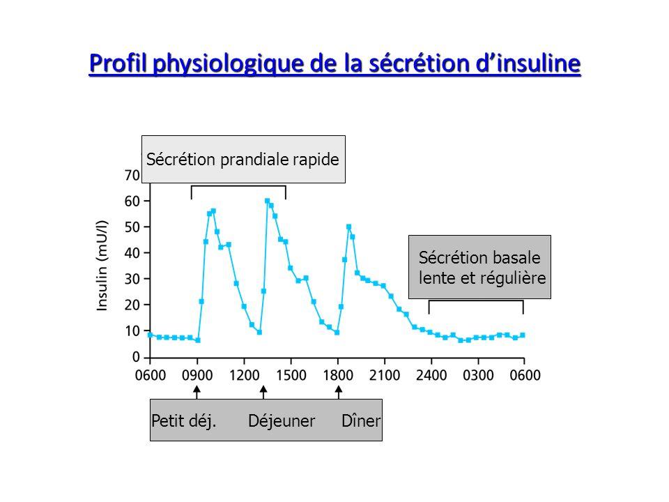 Profil physiologique de la sécrétion dinsuline Sécrétion prandiale rapide Sécrétion basale lente et régulière Petit déj. Déjeuner Dîner