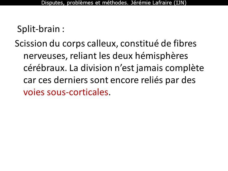 Disputes, problèmes et méthodes. Jérémie Lafraire (IJN) Split-brain : Scission du corps calleux, constitué de fibres nerveuses, reliant les deux hémis
