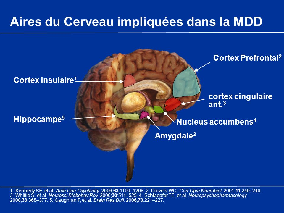 Cortex Prefrontal 2 Amygdale 2 Hippocampe 5 Nucleus accumbens 4 cortex cingulaire ant. 3 Cortex insulaire 1 Aires du Cerveau impliquées dans la MDD 1.