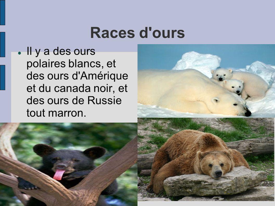 Plan 1 Races d'ours 2 Que mangent les ours? 3 Où dorment les ours? 4 Carte d'ours : où vivent-ils? 5 Comment se protègent-ils du froid? 6 images d'our