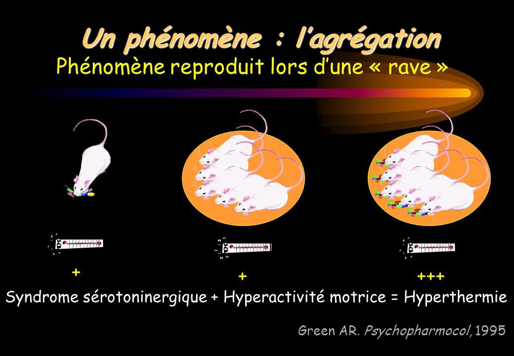 Un phénomène : lagrégation Phénomène reproduit lors dune « rave » Green AR. Psychopharmocol, 1995 + ++++ Syndrome sérotoninergique + Hyperactivité mot