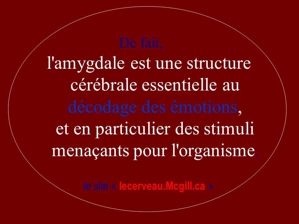 De fait, l'amygdale est une structure cérébrale essentielle au décodage des émotions, et en particulier des stimuli menaçants pour l'organisme. le sit