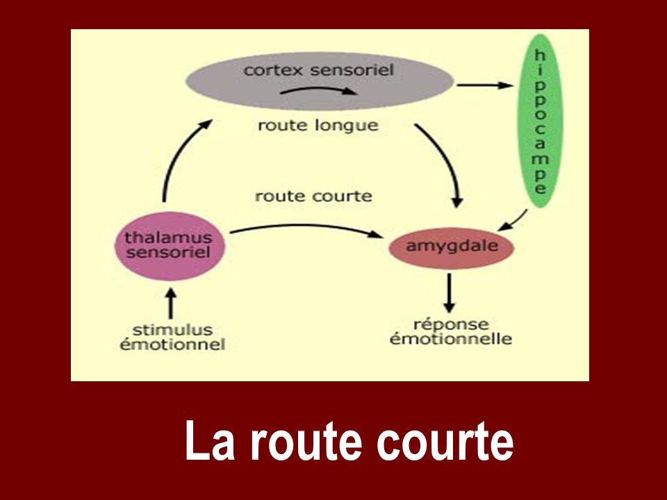 La route courte