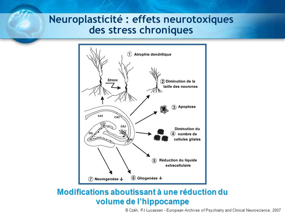 Czéh et al., 2007 Neuroplasticité : effets neurotoxiques des stress chroniques B Czéh, PJ Lucassen - European Archives of Psychiatry and Clinical Neur