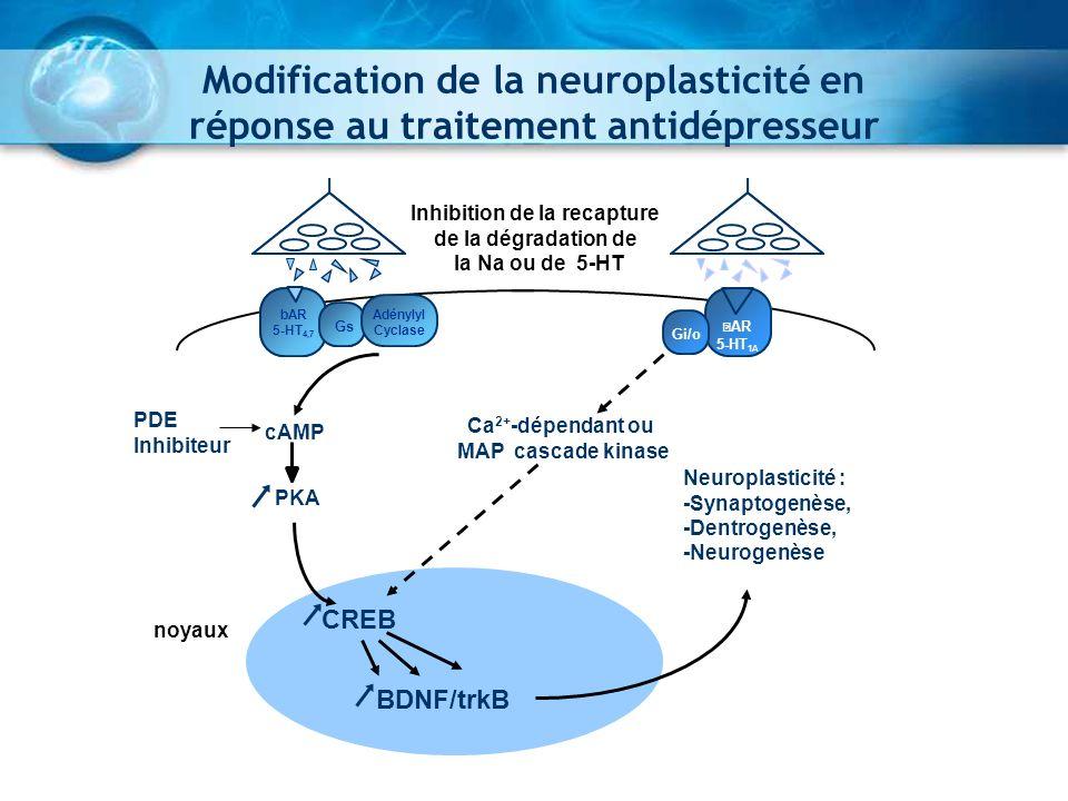 Modification de la neuroplasticité en réponse au traitement antidépresseur BDNF/trkB cAMP PDE Inhibiteur PKA Ca 2+ -dépendant ou MAP cascade kinase Ne