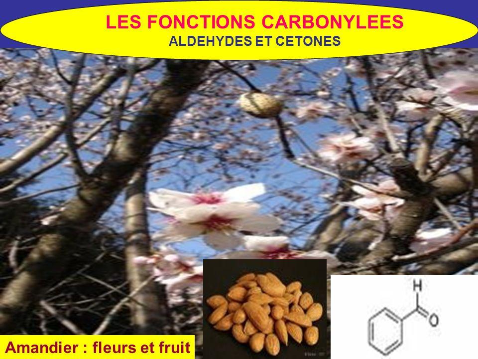 Amandier : fleurs et fruit LES FONCTIONS CARBONYLEES ALDEHYDES ET CETONES