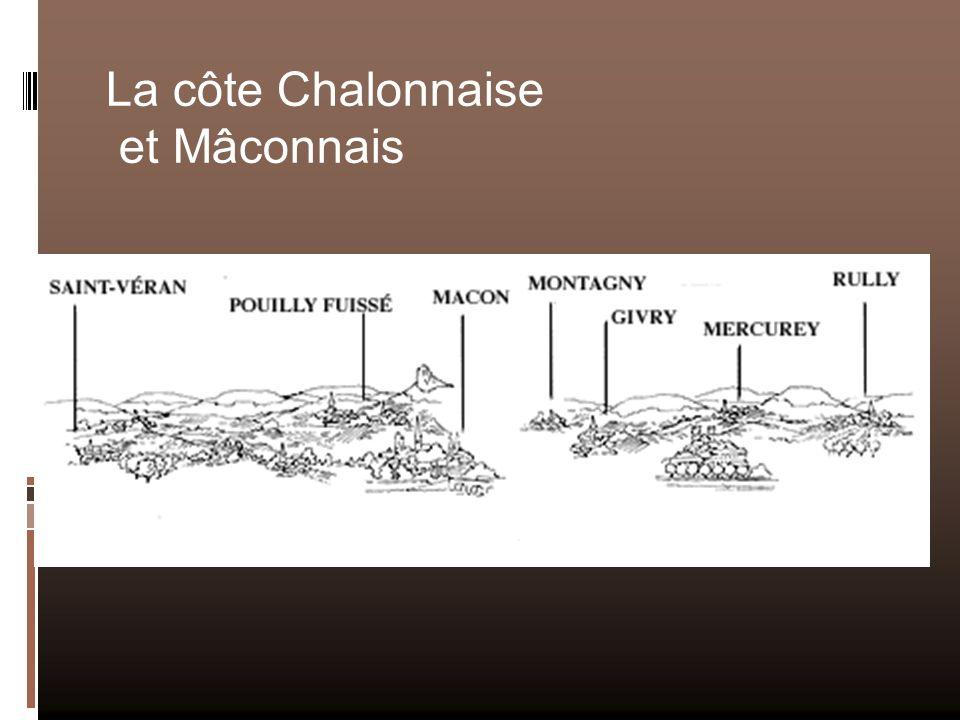 La côte Chalonnaise et Mâconnais