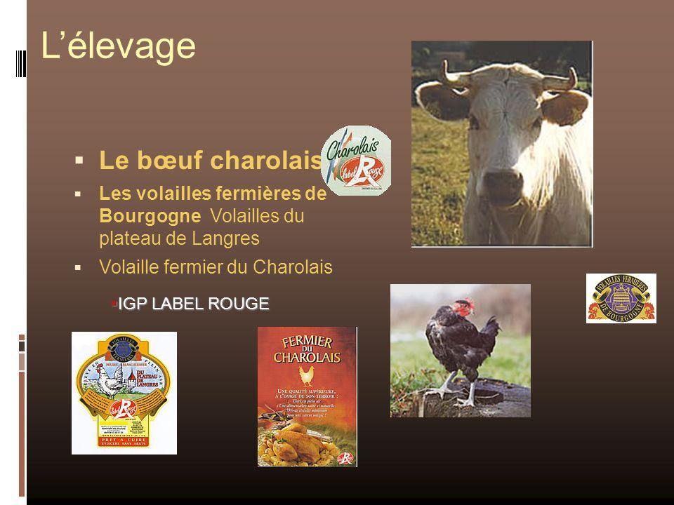 Lélevage Le bœuf charolais Les volailles fermières de Bourgogne Volailles du plateau de Langres Volaille fermier du Charolais IGP LABEL ROUGE IGP LABE