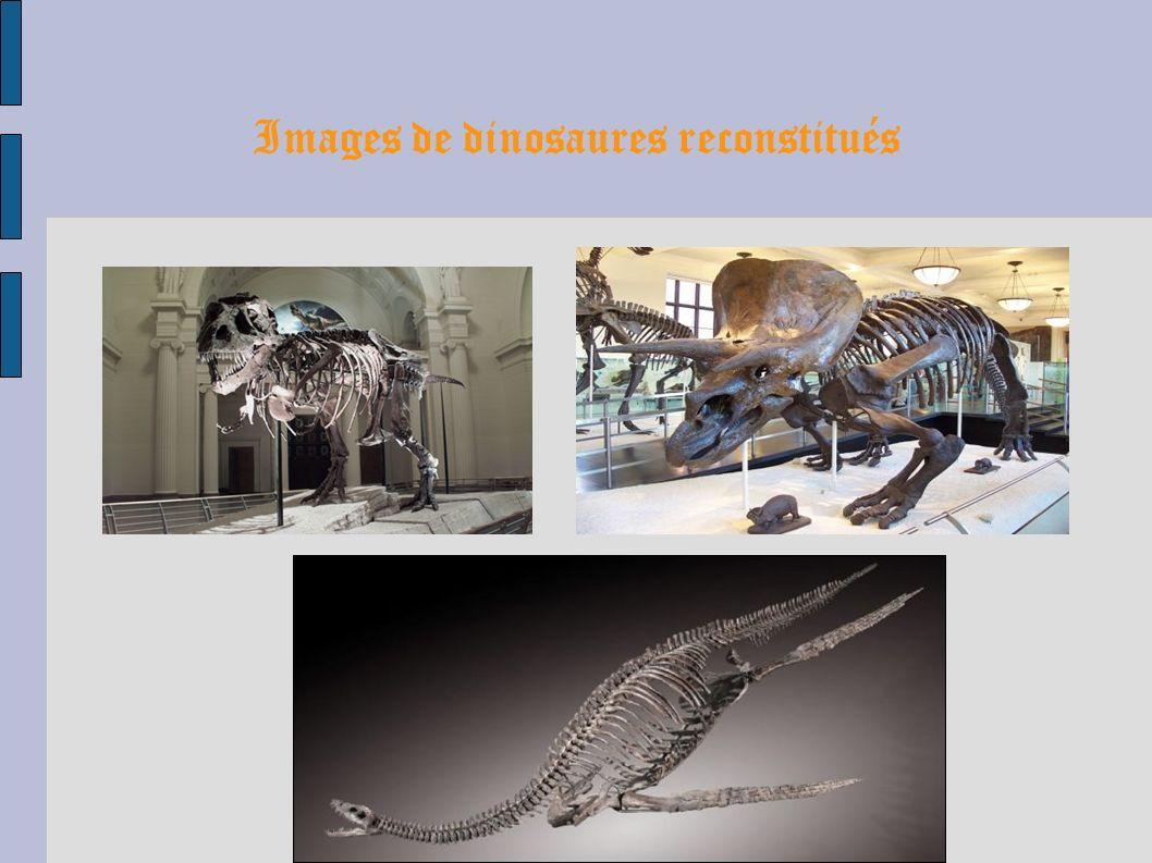 Images de la météorite