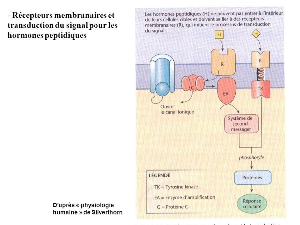 - Récepteurs membranaires et transduction du signal pour les hormones peptidiques Daprès « physiologie humaine » de Silverthorn