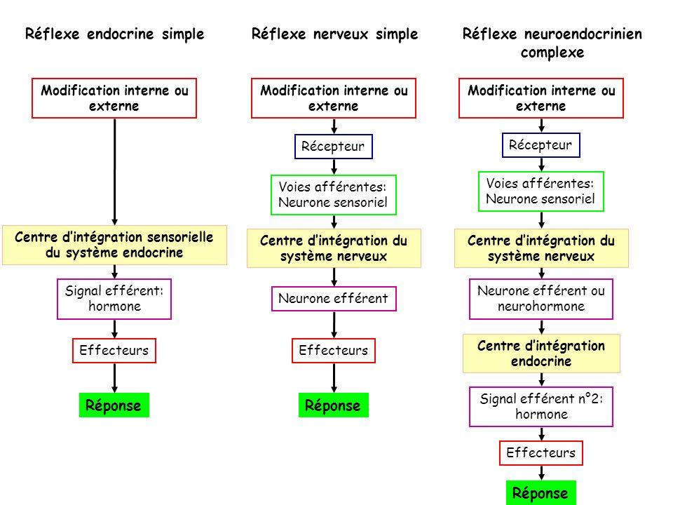Modification interne ou externe Récepteur Voies afférentes: Neurone sensoriel Centre dintégration sensorielle du système endocrine Signal efférent: ho