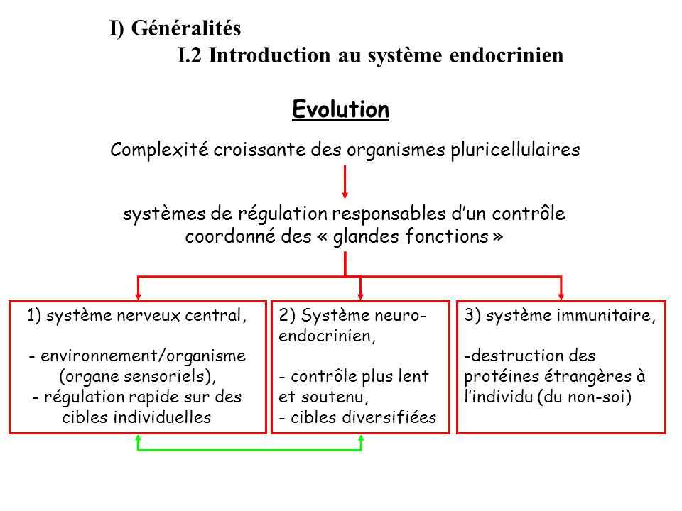 I) Généralités I.2 Introduction au système endocrinien Evolution systèmes de régulation responsables dun contrôle coordonné des « glandes fonctions »