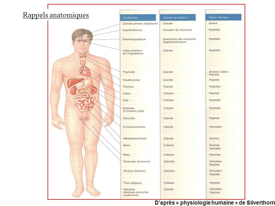 Rappels anatomiques Daprès « physiologie humaine » de Silverthorn