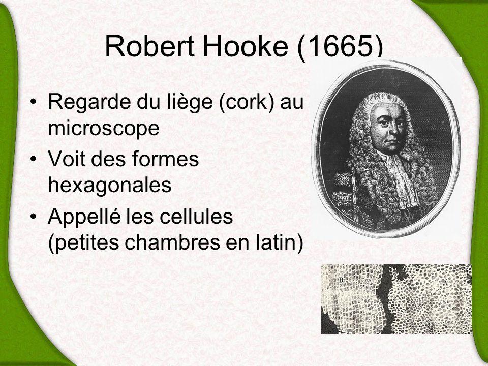 Robert Hooke (1665) Regarde du liège (cork) au microscope Voit des formes hexagonales Appellé les cellules (petites chambres en latin)