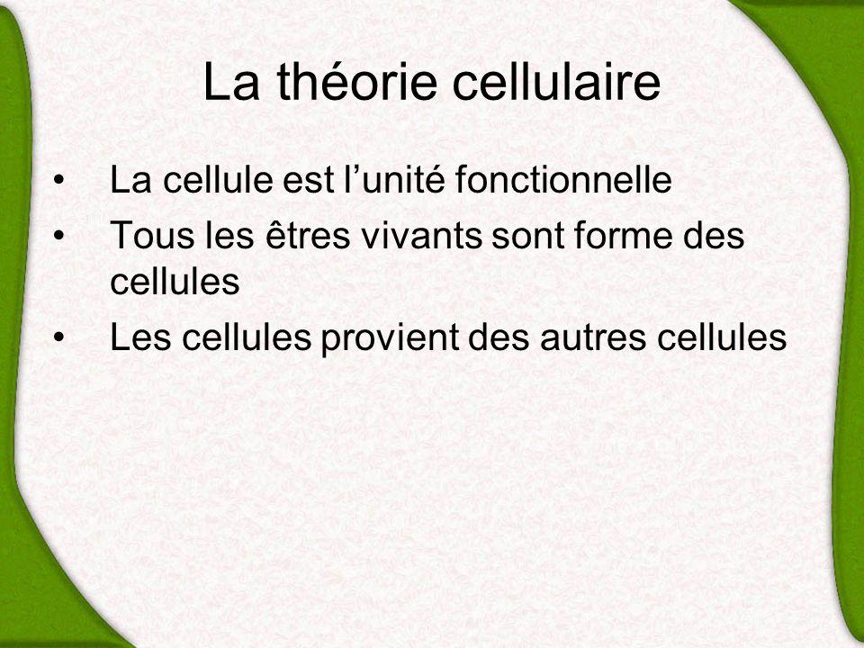 La théorie cellulaire La cellule est lunité fonctionnelle Tous les êtres vivants sont forme des cellules Les cellules provient des autres cellules