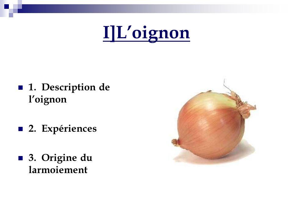 1.Description de loignon Loignon fait partie de la famille des liliacées.