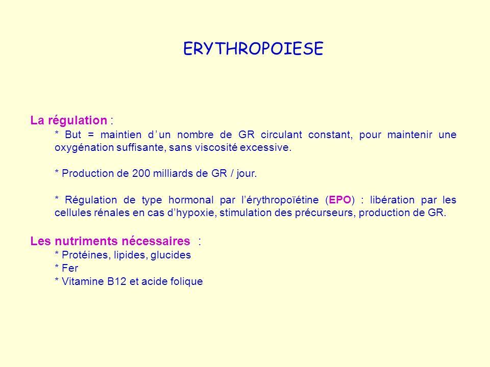 ERYTHROPOIESE La régulation : * But = maintien dun nombre de GR circulant constant, pour maintenir une oxygénation suffisante, sans viscosité excessiv