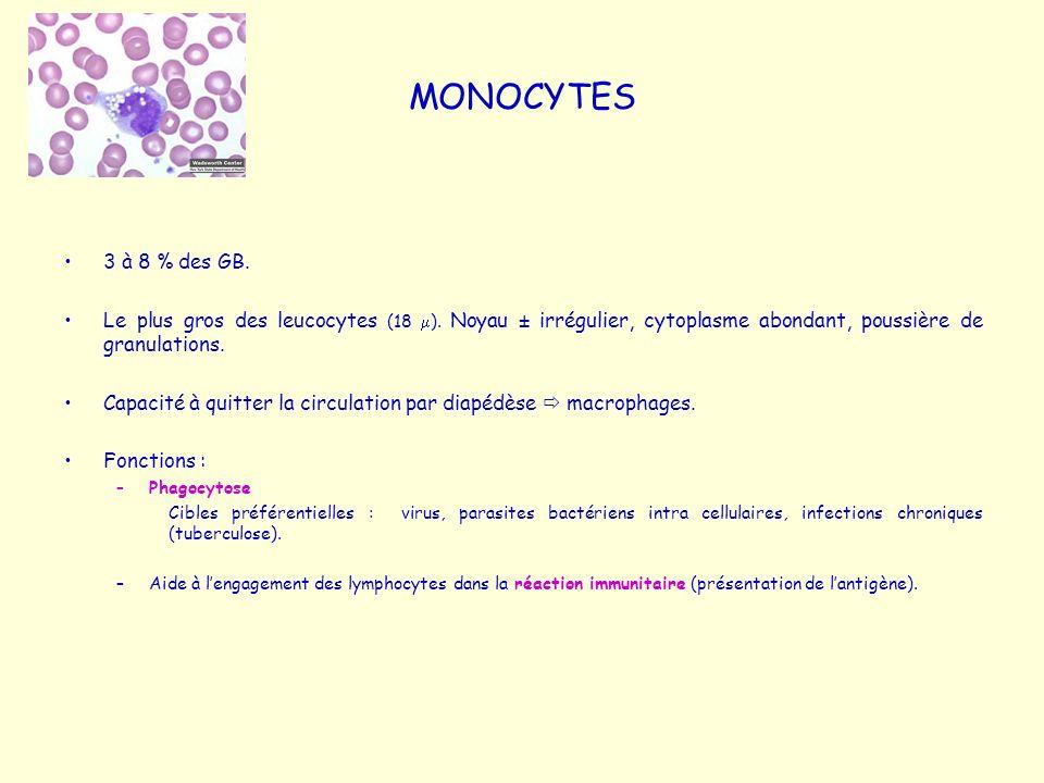 MONOCYTES 3 à 8 % des GB. Le plus gros des leucocytes (18 ). Noyau ± irrégulier, cytoplasme abondant, poussière de granulations. Capacité à quitter la