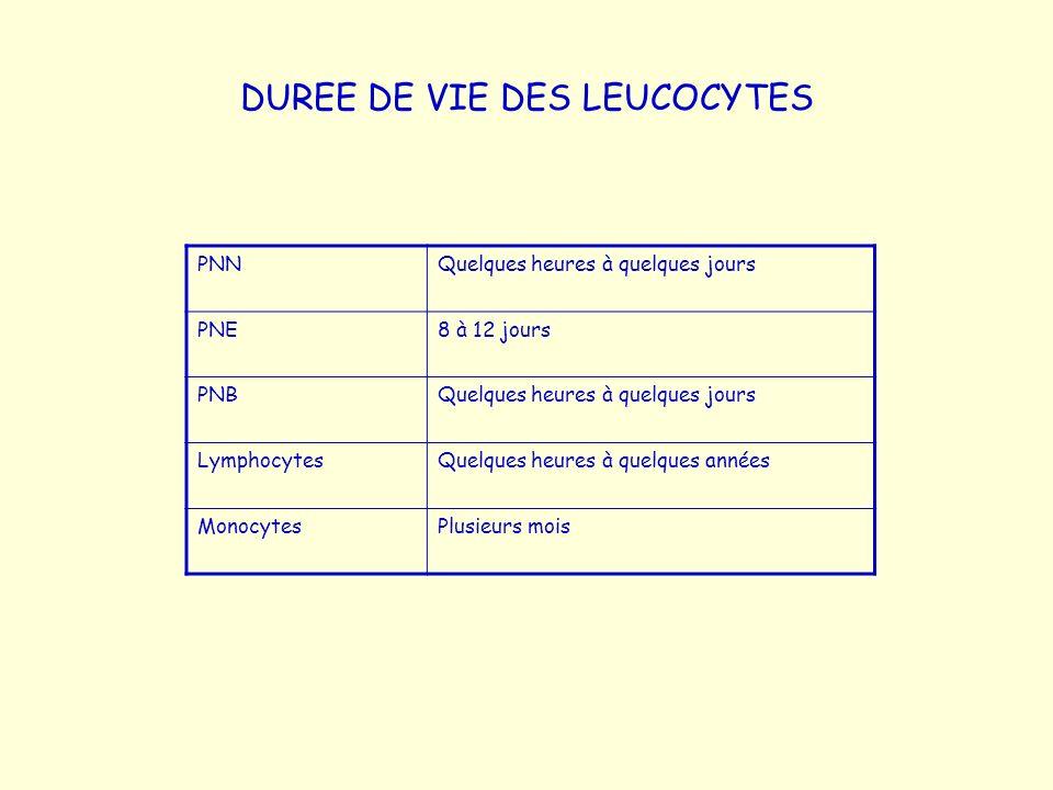 DUREE DE VIE DES LEUCOCYTES PNNQuelques heures à quelques jours PNE8 à 12 jours PNBQuelques heures à quelques jours LymphocytesQuelques heures à quelq