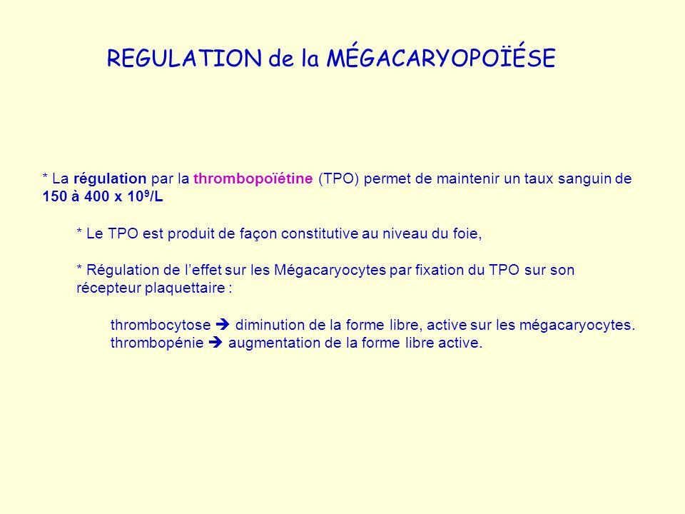 REGULATION de la MÉGACARYOPOÏÉSE * La régulation par la thrombopoïétine (TPO) permet de maintenir un taux sanguin de 150 à 400 x 10 9 /L * Le TPO est