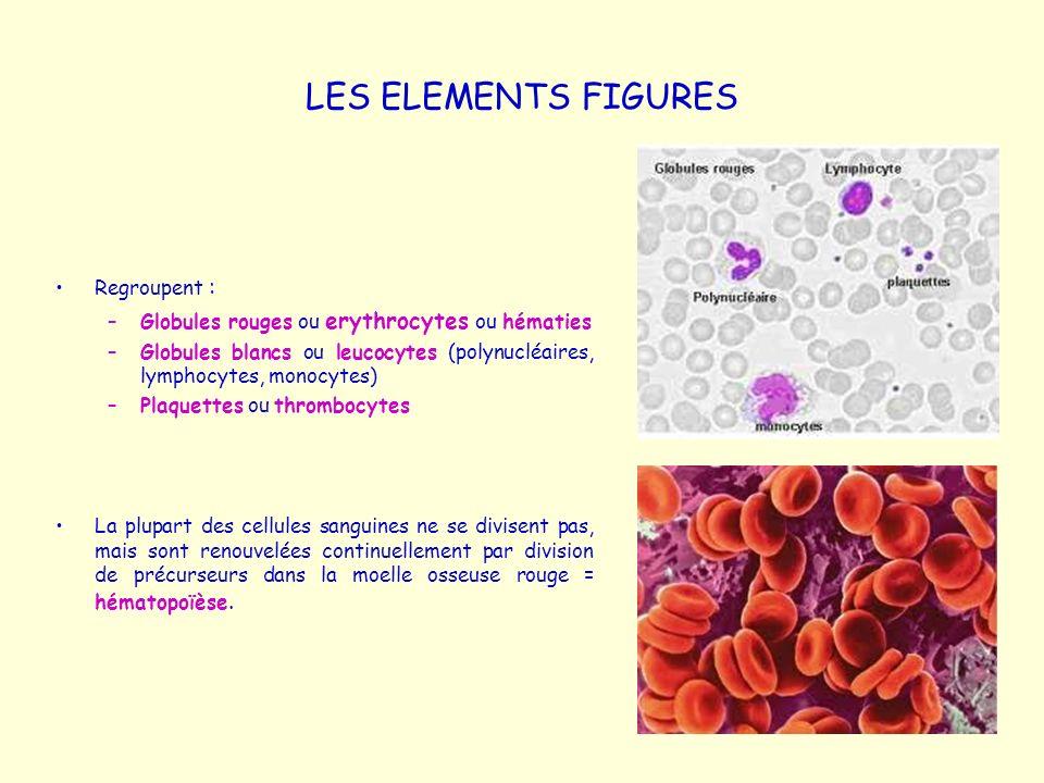 LES ELEMENTS FIGURES Regroupent : –Globules rouges ou erythrocytes ou hématies –Globules blancs ou leucocytes (polynucléaires, lymphocytes, monocytes)