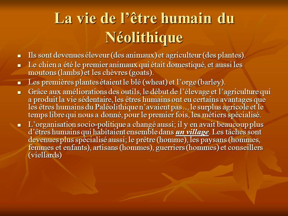 La vie de lêtre humain du Néolithique Ils sont devenues éleveur (des animaux) et agriculteur (des plantes).