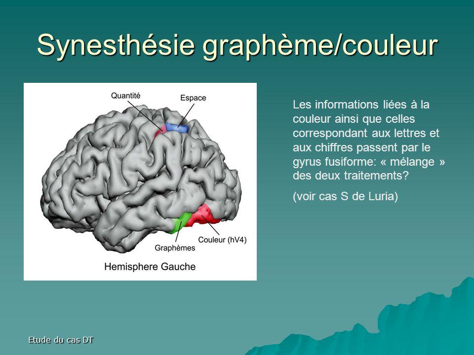 Etude du cas DT Synesthésie graphème/couleur Les informations liées à la couleur ainsi que celles correspondant aux lettres et aux chiffres passent par le gyrus fusiforme: « mélange » des deux traitements.