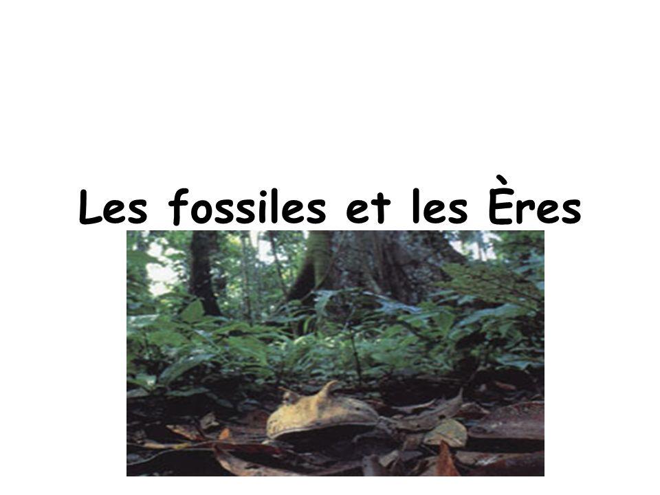 Les Fossiles Les fossiles sont des restes dorganismes qui vivaient très longtemps passé.