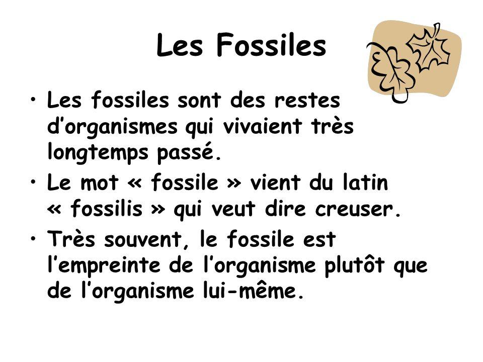 Les Fossiles Les fossiles sont des restes dorganismes qui vivaient très longtemps passé. Le mot « fossile » vient du latin « fossilis » qui veut dire