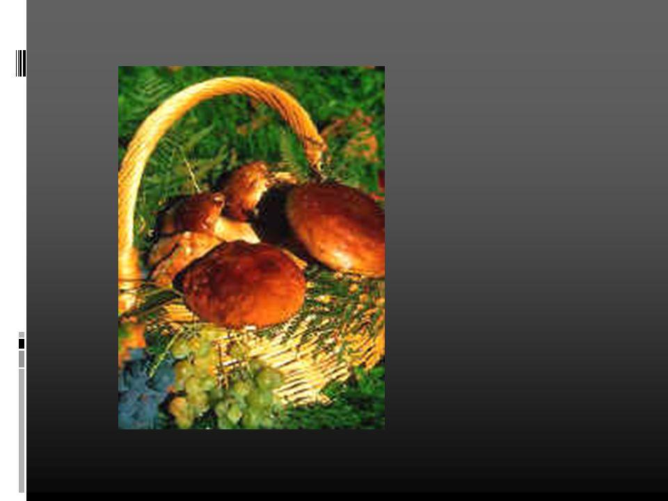 Lagriculture L asperge d Aquitaine le pruneau d Agen,(IGP) La fraise du Périgord (IGP) Kiwis hayward du pays de l Adour (Label)