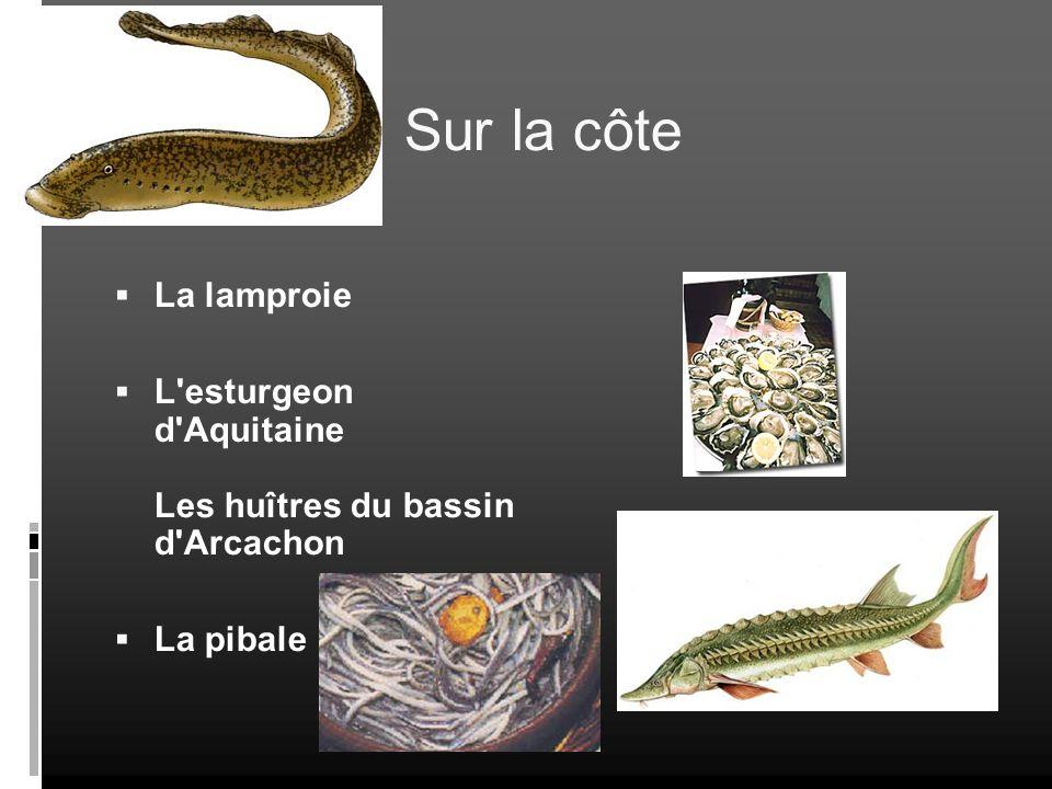 Sur la côte La lamproie L'esturgeon d'Aquitaine Les huîtres du bassin d'Arcachon La pibale