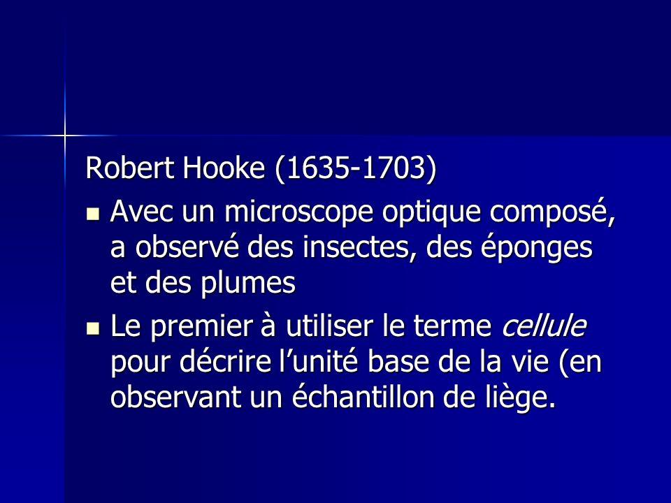 Robert Hooke (1635-1703) Avec un microscope optique composé, a observé des insectes, des éponges et des plumes Avec un microscope optique composé, a o