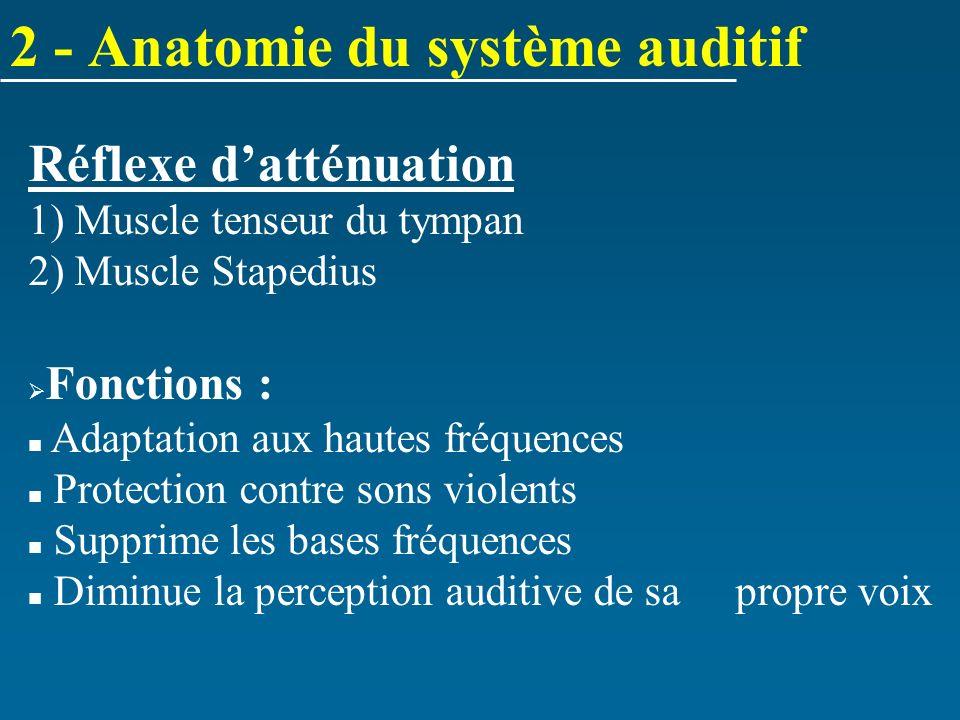 Réflexe datténuation 1) Muscle tenseur du tympan 2) Muscle Stapedius Fonctions : Adaptation aux hautes fréquences Protection contre sons violents Supp