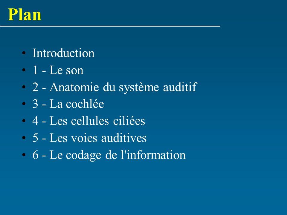 Plan Introduction 1 - Le son 2 - Anatomie du système auditif 3 - La cochlée 4 - Les cellules ciliées 5 - Les voies auditives 6 - Le codage de l'inform