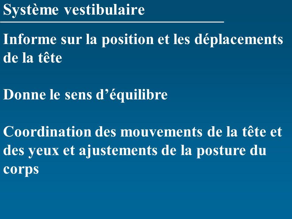 Système vestibulaire Informe sur la position et les déplacements de la tête Donne le sens déquilibre Coordination des mouvements de la tête et des yeu