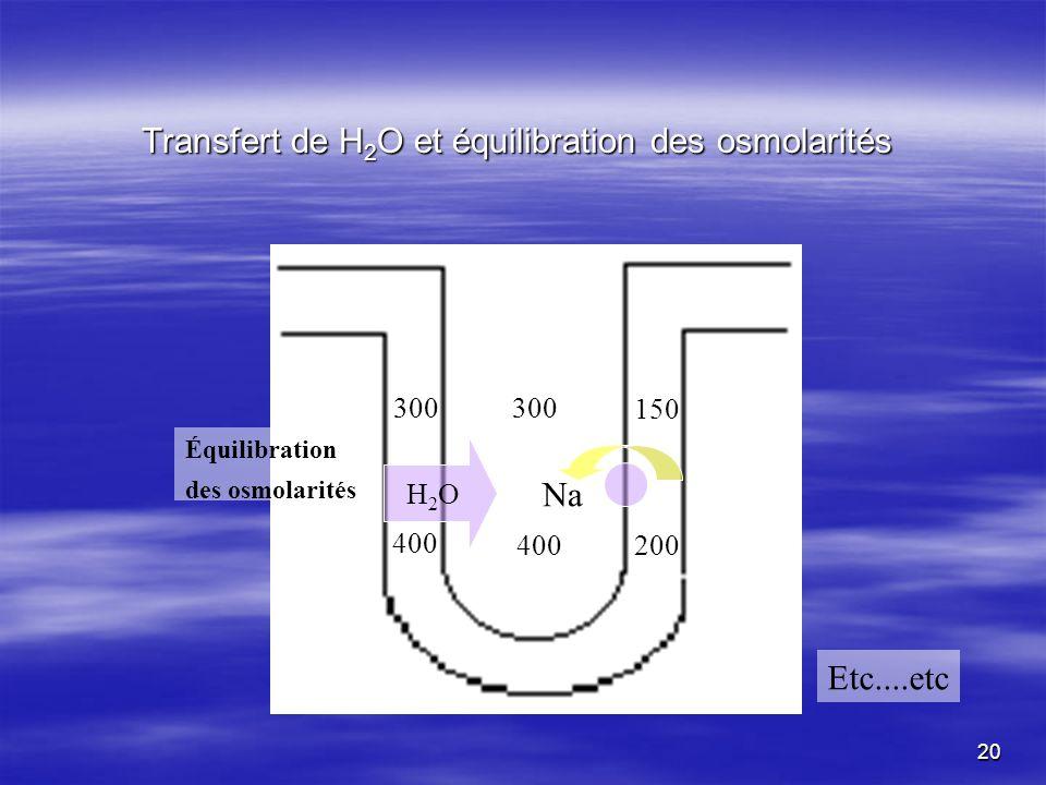 Transfert de H 2 O et équilibration des osmolarités 400 300 150 Na 200 300 400 H2OH2O Etc....etc Équilibration des osmolarités 20