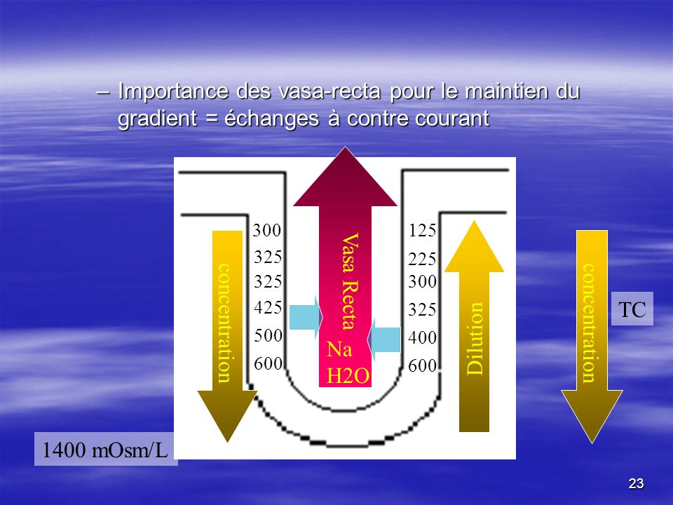 –Importance des vasa-recta pour le maintien du gradient = échanges à contre courant 600 125 600 300 500 400 425 325 300 325 225 concentration Dilution