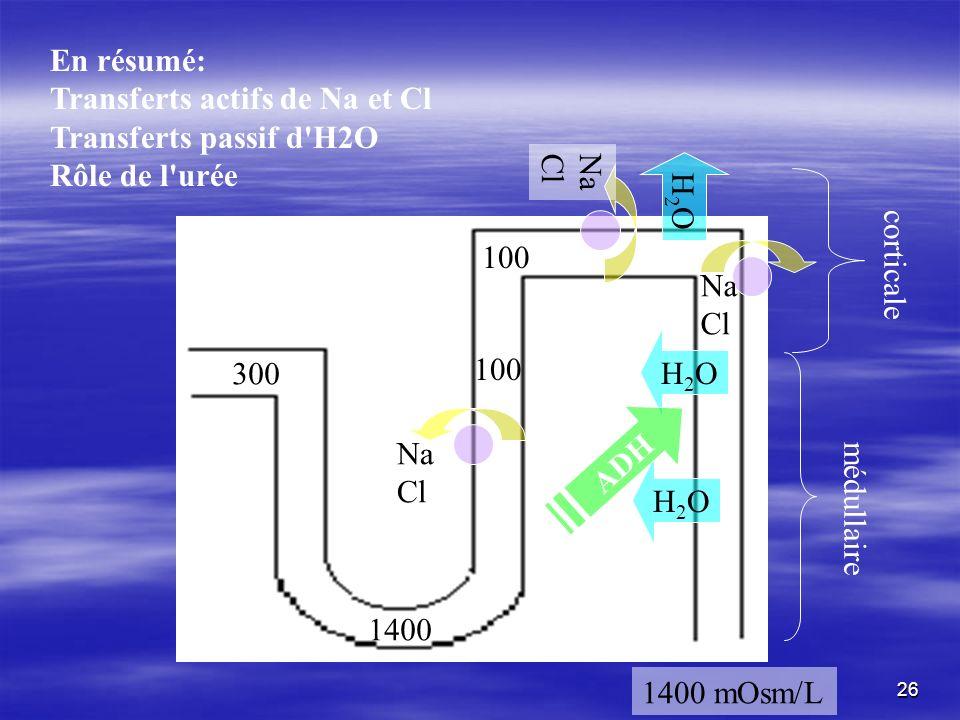 Na Cl Na Cl Na Cl H2OH2O H2OH2O H2OH2O médullaire corticale 1400 mOsm/L 100 1400 300 ADH En résumé: Transferts actifs de Na et Cl Transferts passif d'