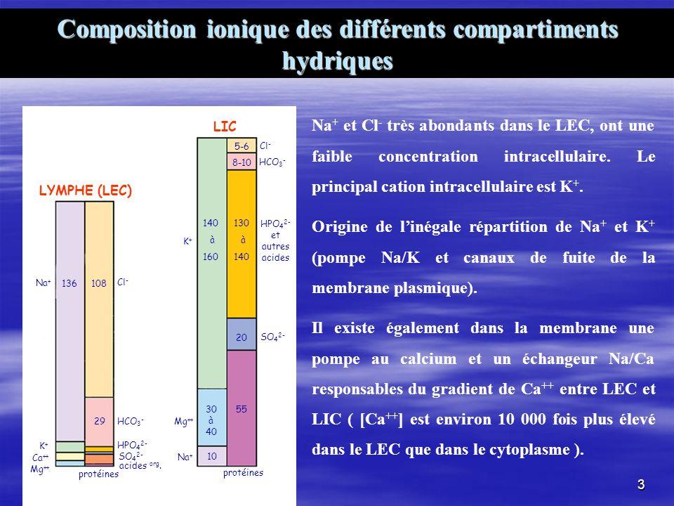 Composition ionique des différents compartiments hydriques Na + et Cl - très abondants dans le LEC, ont une faible concentration intracellulaire. Le p