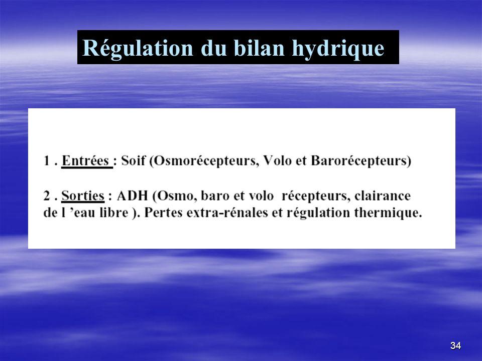 Régulation du bilan hydrique 34