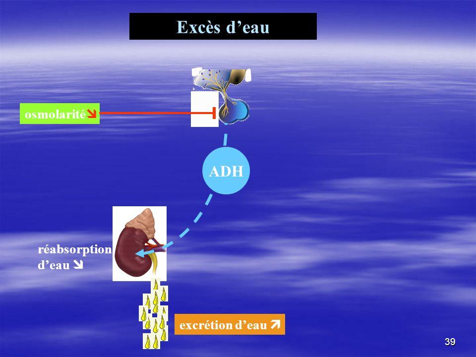 Excès deau ADH réabsorption deau osmolarité excrétion deau 39