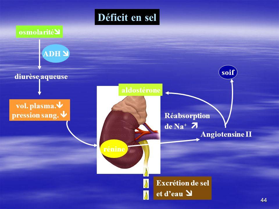 Déficit en sel osmolarité rénine Réabsorption de Na + ADH diurèse aqueuse vol. plasma. pression sang. Angiotensine II aldostérone soif Excrétion de se
